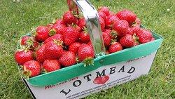Lotmead Farm
