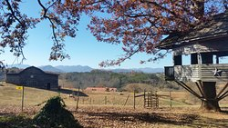 Carolina Bison Farm