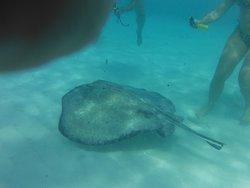 Cayman Kayak Adventures