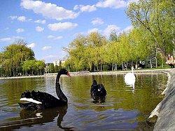 Lebedinnoye Lake