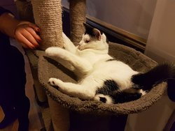 Super playful cat!