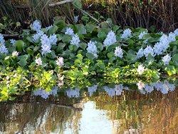 Some pretty swamp flowers