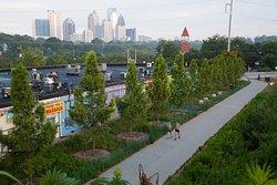 Trees Atlanta Walking Tours