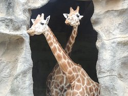 Roar and Snore Taronga Zoo