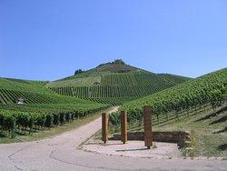 Holzapfel Winery