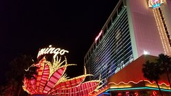 Casino at the Flamingo Las Vegas