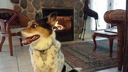 Our dog enjoying the fireplace.