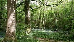 Oak Park Forest Park
