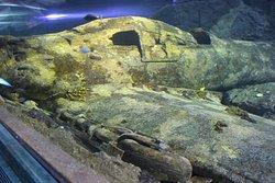 Настоящий затопленный самолет в большом аквариуме