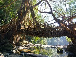 Jingmaham Living Root Bridge