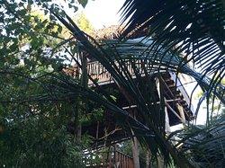 Mi casa en el árbol