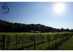 65 Vines Winery