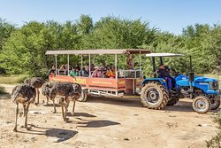 ‪Safari Ostrich Show Farm‬