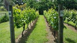 Craigow Vineyard
