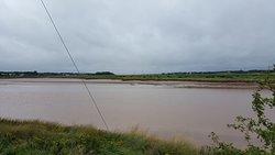 Muddy Salmon River