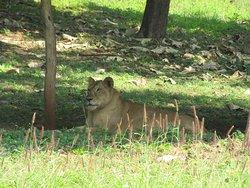 Visakhapatnam Zoo