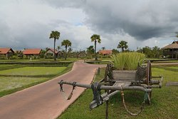 An oasis of tranquility among the rice fields