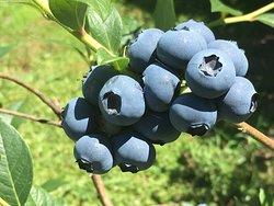 Clyde River Berry Farm