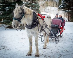 Aspen Carriage and Sleigh Day Tours