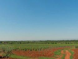 Winery MISAL