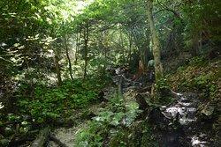 Monastery Gorge