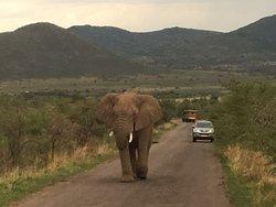 Go Safari