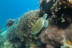 Coral Dive & Adventure