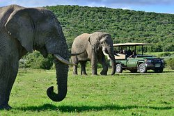 Shamwari Game Reserve Lodges