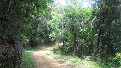 Parque Estadual da Cantareira - Nucleo Aguas Claras
