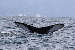 Eco Explorer Whale Watching