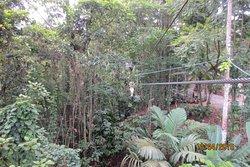 The Jungle Breeze