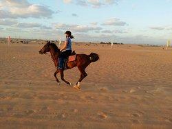 Dubai Desert Horse Ride Experience