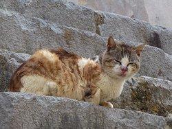 """Fritz the Cat"" der alte Kater beobachtet sein Revier"