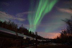 Alaska Borealis Tours & Taxi