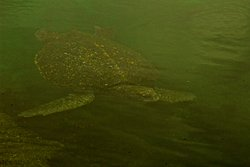 Isabela Island