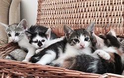 La Pisici