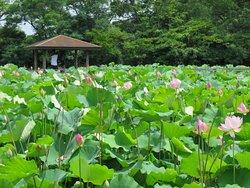 Hoshina Pond
