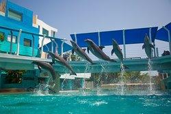 互動式水族館