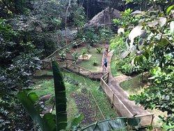 Parc des Mamelles, le Zoo de Guadeloupe