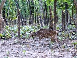 Banpukuria Deer Park