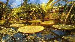 Botanisk Have og Væksthusene