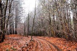 Orman yürüyüşünden