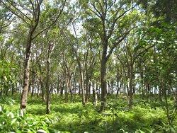 Tilligerry Habitat Tanilba Bay