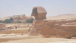 Pyramids Camel Tours - Day Tours