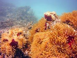 Diving Blue Bay