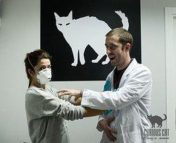 Curious Cat Escape Room