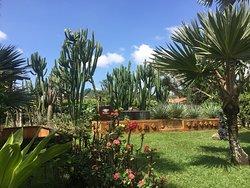 Jardin Exotico Kamala
