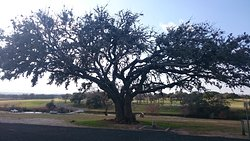 Lady Bird Johnson Municipal Park