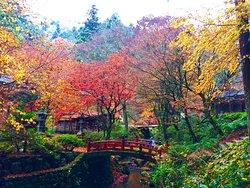 Yokokuraji Temple