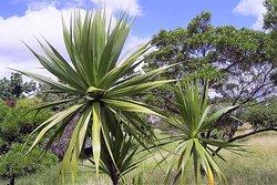 Rivulet Terre Rouge Estuary Bird Sanctuary